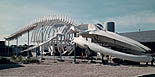 photo of whale skeleton