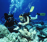 Photo of scuba divinig researchers in Fiji