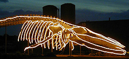 Whale skeleton aglow with lights