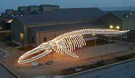 Photo of lighted whale skeleton
