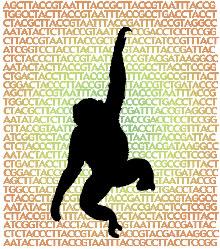 Illustration of chimp