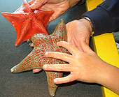 Photo of kids hands and starfish