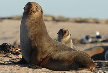 Photo: fur seals