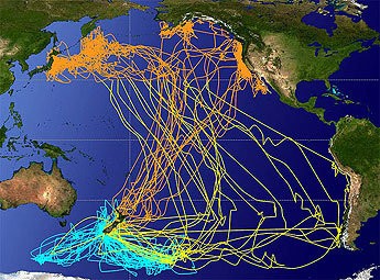 Shearwater migrations map