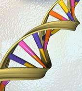 genome art