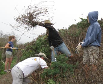 volunteers work on earthen berm
